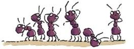 mieren1